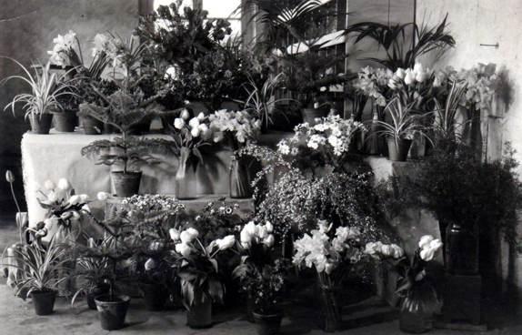 Schnittblumen - 1953
